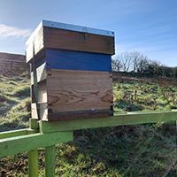 Moving the Hives to Their New Home